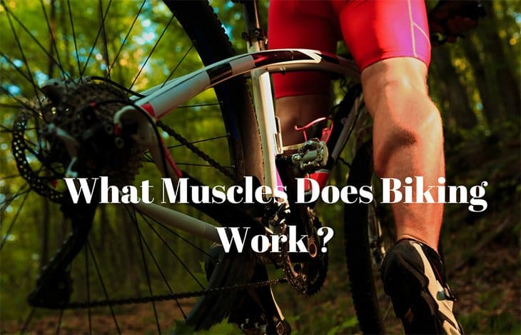 What Muscles Does Biking Work